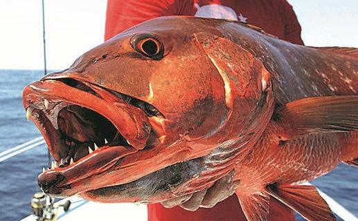 Pêche dans le golfe du Chiriqui