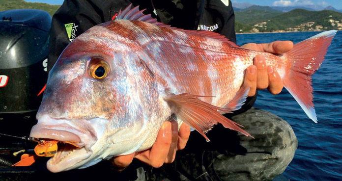 Pêche au tenya en mer