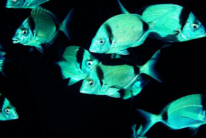 La biologie au service des pêcheurs