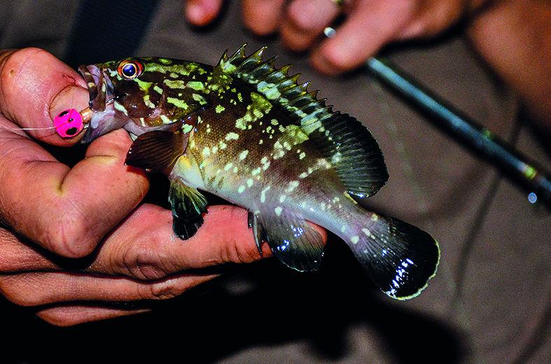 Pêche en rockfishing la nuit