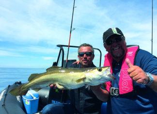 Pêche du lieu jaune au leurre métallique