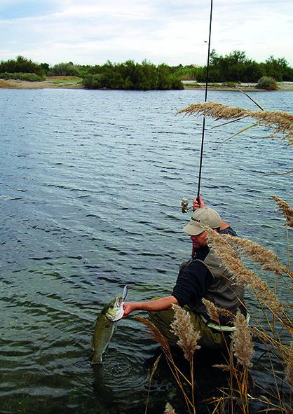 Couleur et goût des leurres pour la pêche en mer