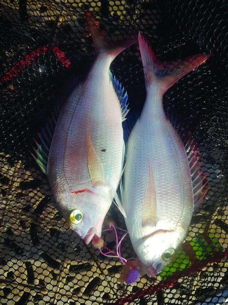 Pêche Tenya du bord de mer