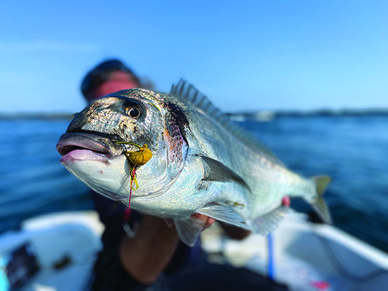 Pêche de la daurade au tenya en estuaire